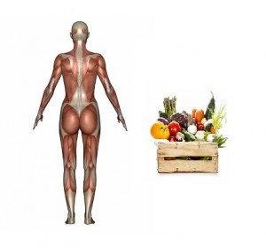 muscle growth and diet
