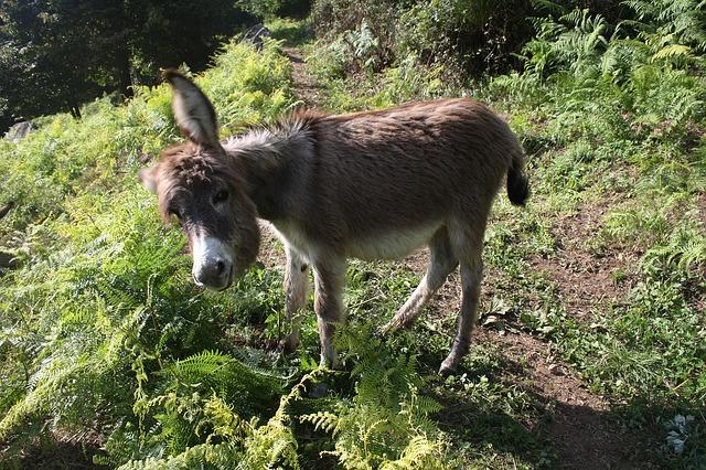 best butt exercises donkey kicks