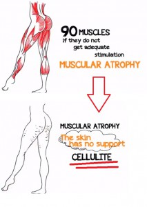 muscles and cellulite